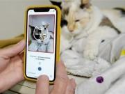 تطبيق للتعرف على صحة القطط النفسية