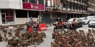 بسبب كورونا.. مئات القرود الجائعة تجتاح الشوارع التايلاندية