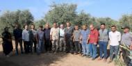 بالصور|| تيار الإصلاح ينفذ مبادرة تطوعية لجني ثمار الزيتون في المحافظة الوسطى
